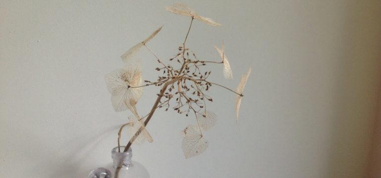 droogbloemen in huis